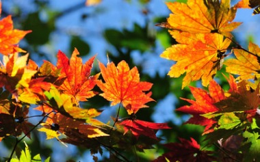 """The Autumn Leaves of Red and Gold"""